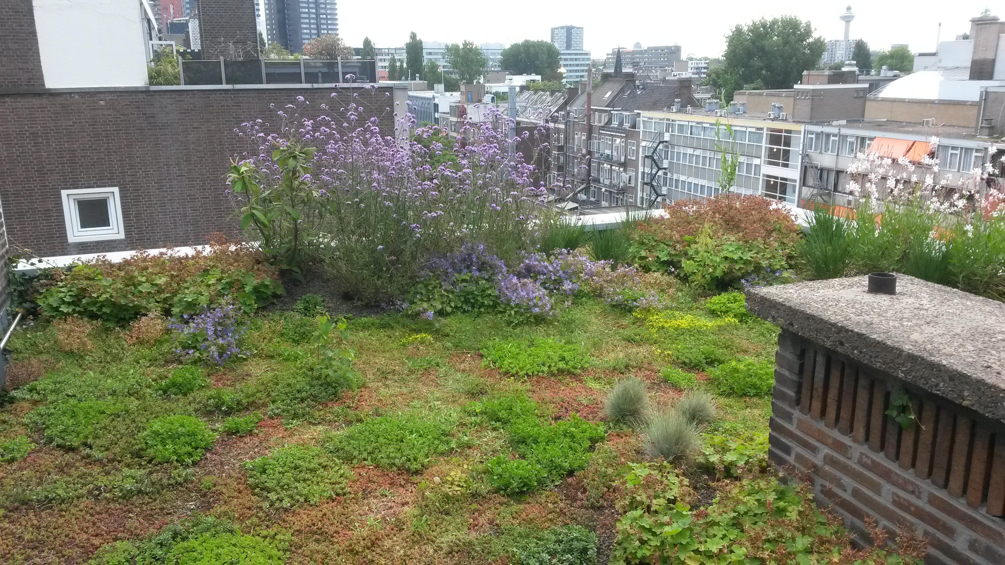 Green roofs gardener