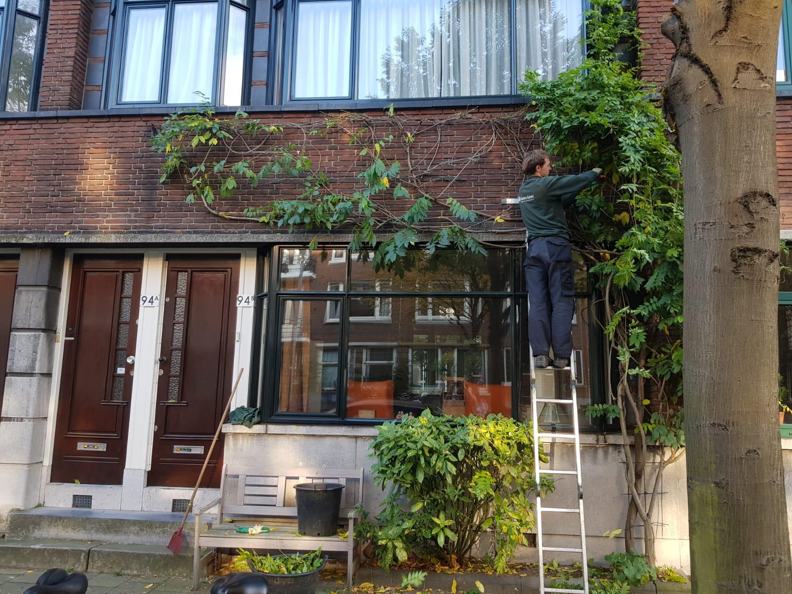 garden maintenance company