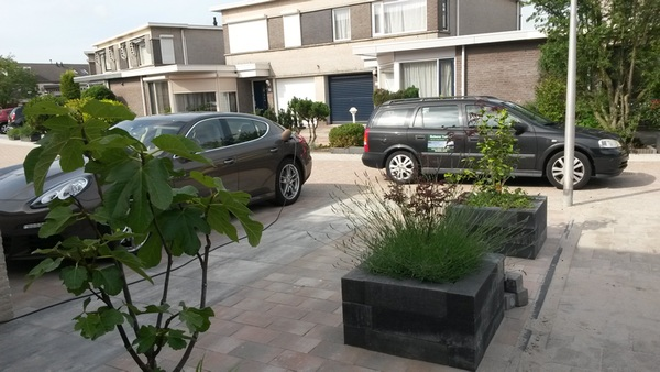 beplanting Capelle